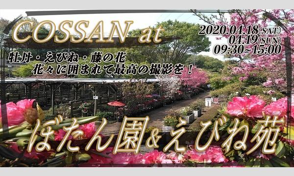 COSSAN at 町田ぼたん園&えびね苑(1日目) イベント画像1