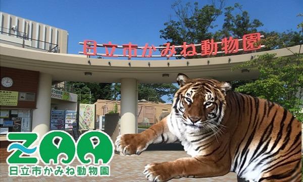 【5/5(水・祝)入園分】かみね動物園入園予約 イベント画像1