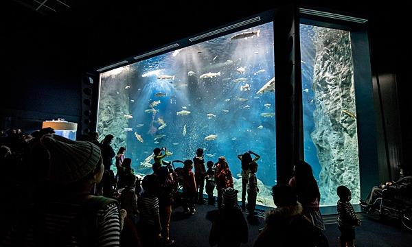 サケのふるさと千歳水族館の【コロナ対策】 サケのふるさと千歳水族館 クレジット購入対応 年間パスポートイベント