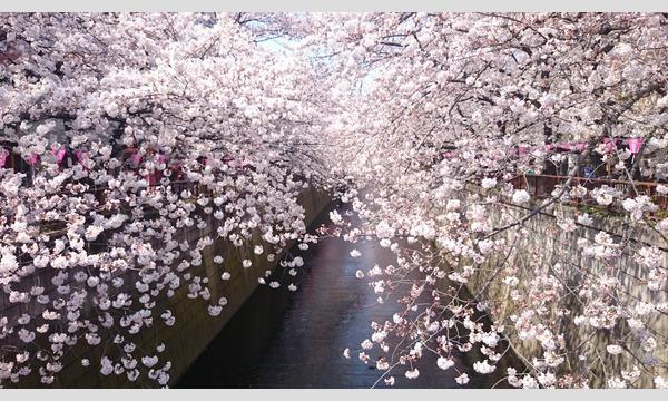 中目黒お花見交流会             ( ^_^)/☆\(^_^  ほろ酔い気分で花見をしましょう イベント画像1