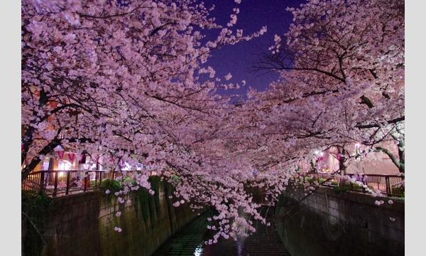 中目黒お花見交流会             ( ^_^)/☆\(^_^  ほろ酔い気分で花見をしましょう イベント画像2