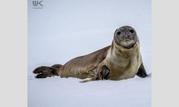 南極大陸 探検ガイド、ワーナー・クルーズによる  特別オンラインセミナー イベント画像3