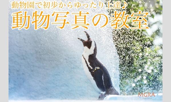 株式会社ケイエムコーポレーションの動物園で初歩からゆったり上達!動物写真の教室イベント