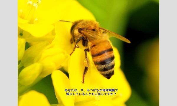 ドキュメンタリー映画「みつばちと地球とわたし」上映会 + この映画の主題歌を歌う、Asumi(あすみ)さんミニコンサート イベント画像1