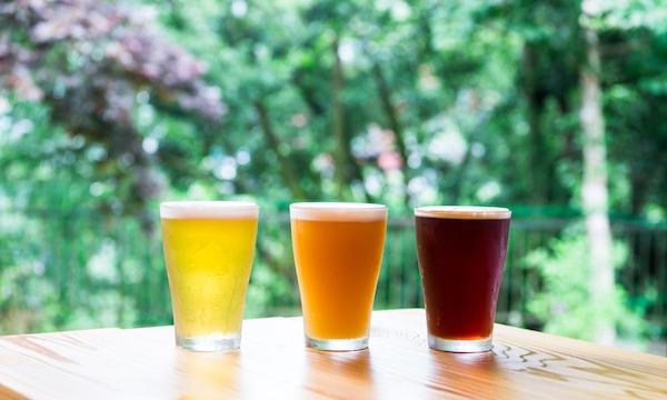 VERTERE 自社醸造1周年記念       【できたてビール飲み放題】