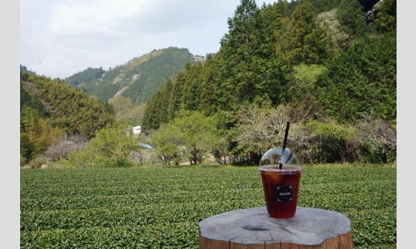 キタニ トモコのお茶旅講座第22回 日本の紅茶文化を学ぶ~和紅茶のふるさとを訪ねてイベント