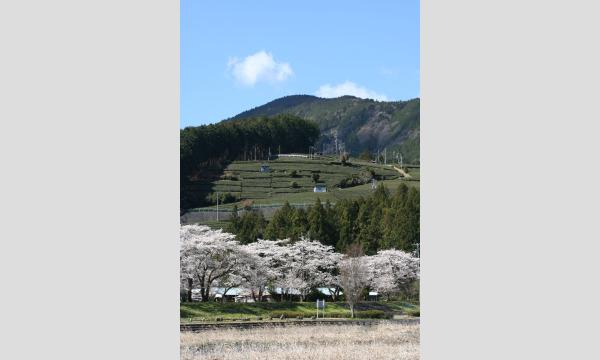 お茶旅講座第22回 日本の紅茶文化を学ぶ~和紅茶のふるさとを訪ねて イベント画像3