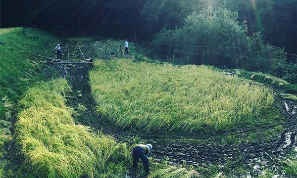 八芳園の大人の食育セミナー お茶にも自然発酵を!~健康に役立つ「発酵」~ イベント画像2