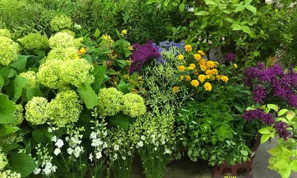 無農薬で花を栽培する意義を「吉垣農園さん」から聞く イベント画像2