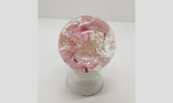 3/4(木)桜フルードゥグラスドーム作り【オンライン1dayセミナー】 イベント画像1