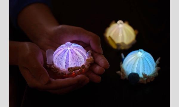 海の自由研究フェス2020ーオンラインー【本物のウニの殻で作る「ウニランプ」づくり】 イベント画像1