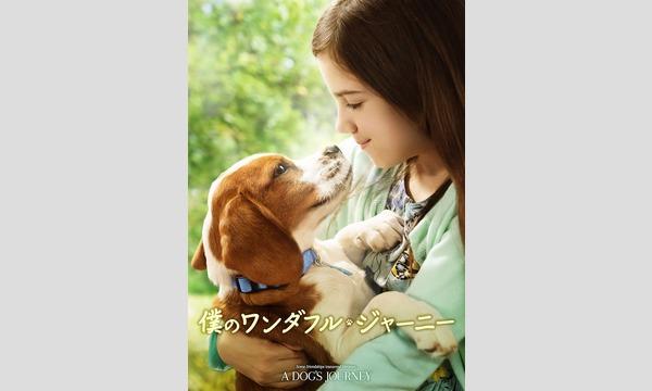 STARLIGHT CINEMAZ 映画鑑賞券【12月13日 - 僕のワンダフル・ジャーニー】 イベント画像2