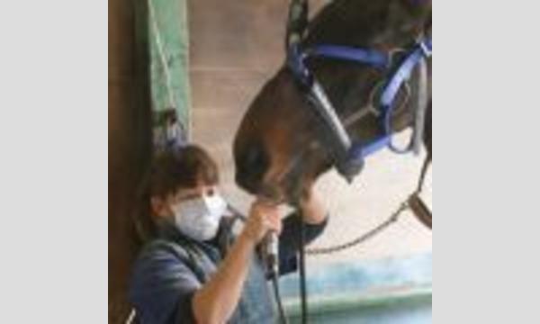 第2回Horse Messe(ホースメッセ)特別講習会 デンタリスト伊藤桃子氏が語る 馬の健康講座 イベント画像2
