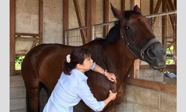 第3回Horse Messe(ホースメッセ)第3会場 馬のための整体マッサージ実演講座 講師:馬屋原孝惠氏 イベント画像2