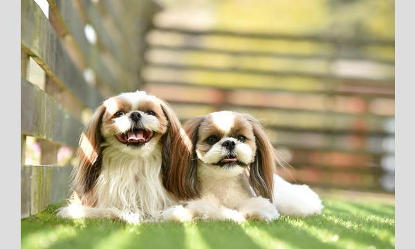 鼻短犬祭2021 – Short Muzzle Dog Festival – イベント画像2