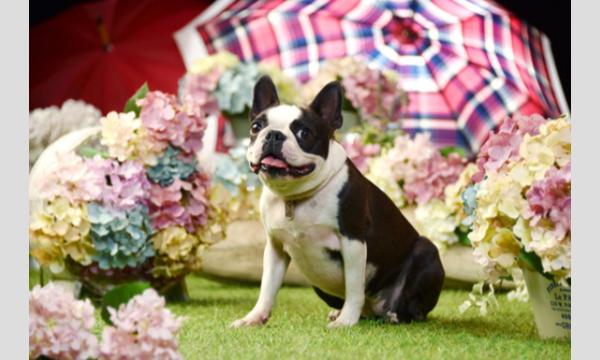 鼻短犬祭2021 – Short Muzzle Dog Festival – イベント画像3
