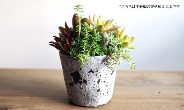 多肉植物の寄せ植えワークショップ「TOKIIRO的ボタニカルライフのすゝめ。」@『NEWOLD STOCK』(蔵前浅草) イベント画像3