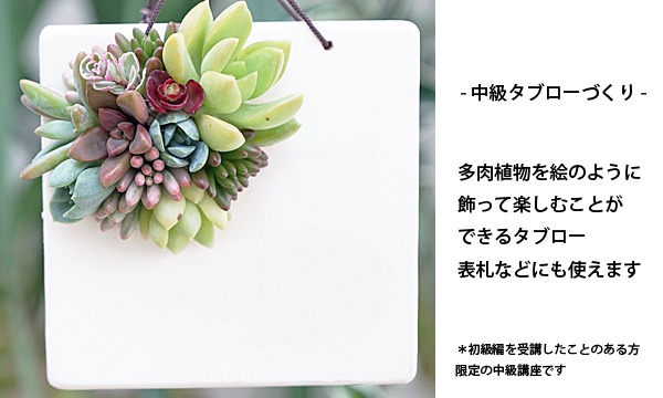 多肉植物の寄せ植えワークショップ「TOKIIRO的ボタニカルライフのすゝめ。」@『NEWOLD STOCK』(浅草蔵前) イベント画像3