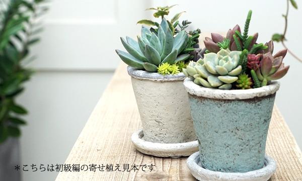 多肉植物の寄せ植えワークショップ「TOKIIRO的ボタニカルライフのすゝめ。」@『NEWOLD STOCK』(浅草蔵前) イベント画像2