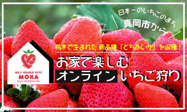 [追加日程]【抽選】いちご日本一のまち「真岡市」が主催!お家で楽しむオンラインいちご狩り イベント画像1