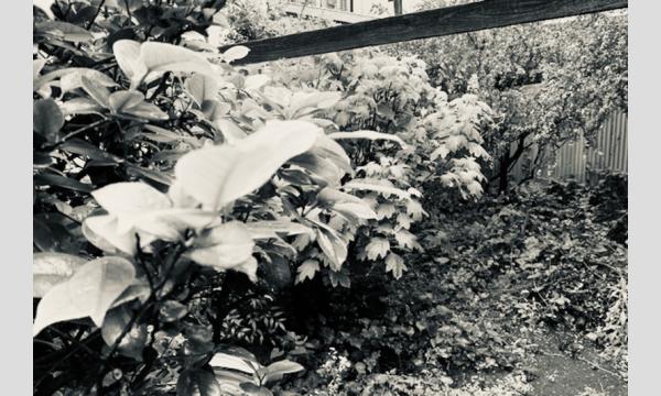 上七軒文庫の【オンライン】寄付講座「知恵の庭」第2シーズン第2回「絵をつくる、絵をうつす」(松平莉奈)イベント
