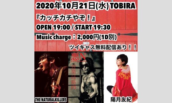 TOBIRAの『カッチカチやぞ!』イベント