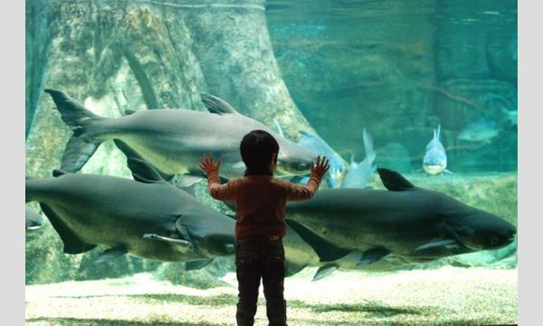 世界淡水魚園水族館 アクア・トトぎふ 入館券 イベント画像1