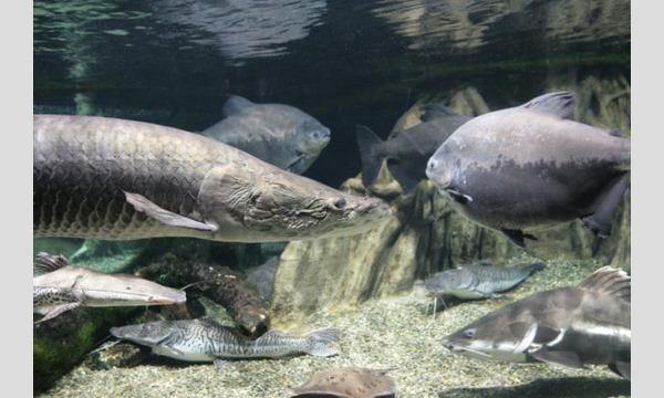 世界淡水魚園水族館 アクア・トトぎふ 入館券 イベント画像2
