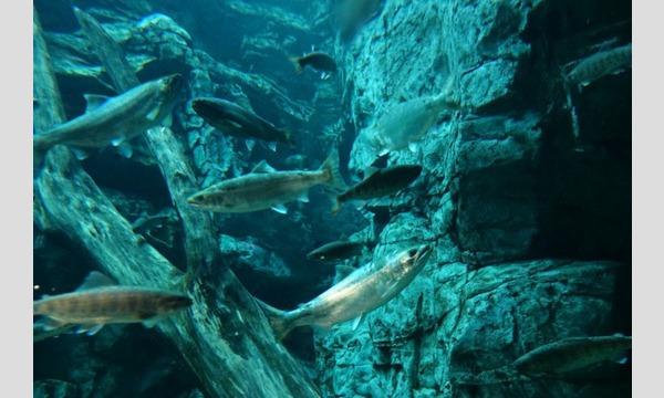 世界淡水魚園水族館 アクア・トトぎふ 入館券 イベント画像3