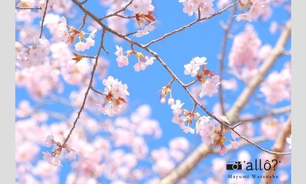 【オンライン開催・3月】カメラとおうちを楽しもう 渡邉真弓フォトレビュー「桜」allo?写真教室 イベント画像1