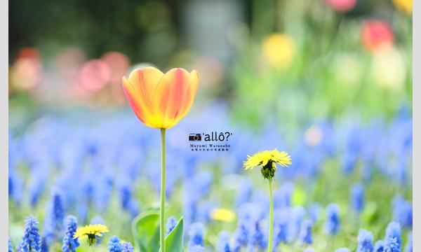 【オンライン開催】カメラとおうちを楽しもう 渡邊真弓フォトレビュー「花のある風景」 イベント画像2
